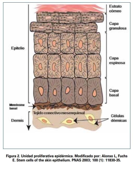 Proceso de queratinización de la piel