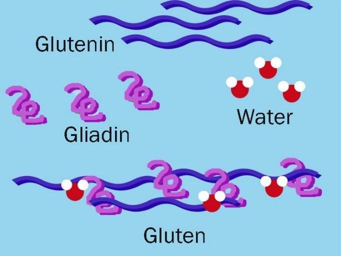Composición del gluten