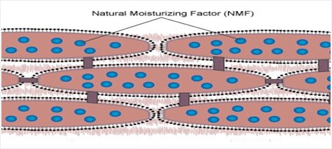 Natural Moisturizing Factor