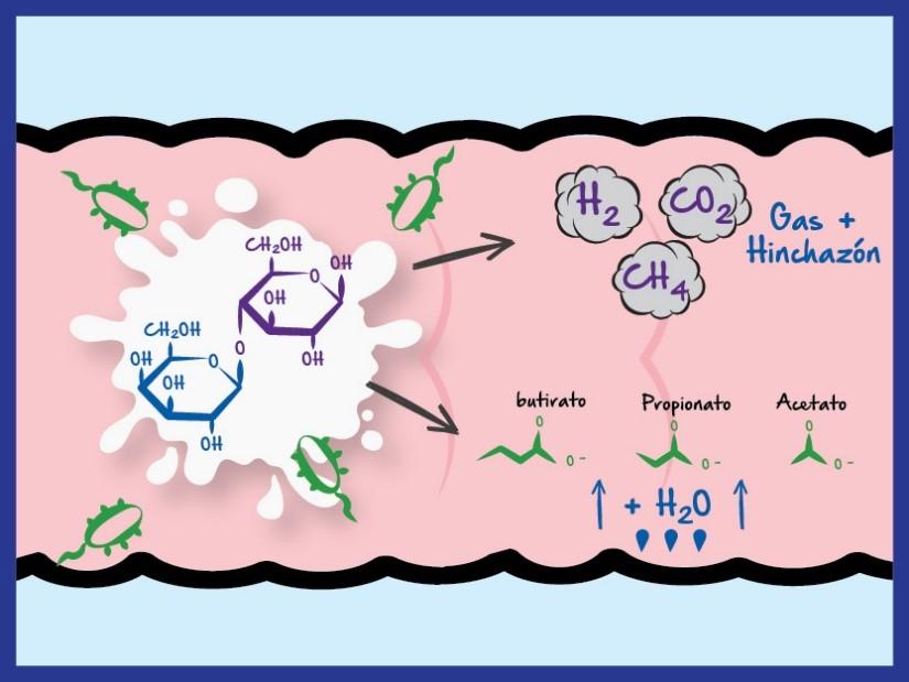 Gases en el intestino por indigestión de la lactosa