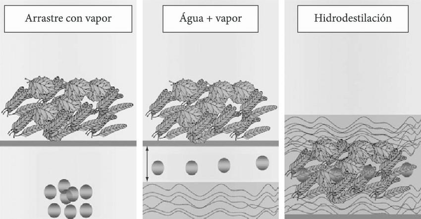Obtención de hidrolatos por 3 métodos diferentes
