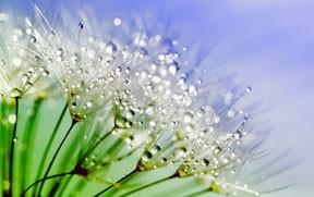Flores hidrolatos