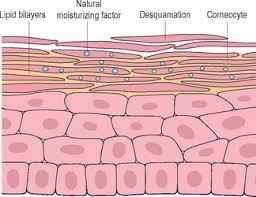 Descripción de la parte superficial de la piel