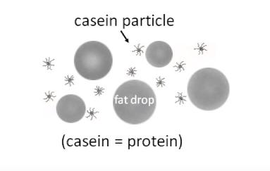 Microscopía de una emulsión de leche con partículas de grasa y caseína