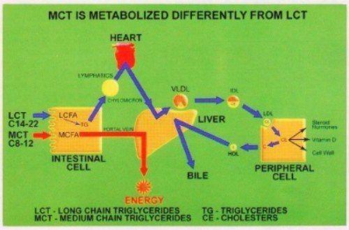 Metabolismo de los triglicéridos de cadena media comparado con el de los de cadena larga
