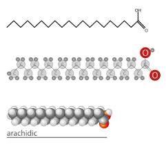 Diferentes formas de esquematizar la estructura química de un ácido graso