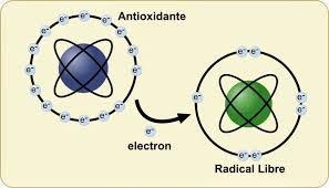 Los antioxidantes ceden electrones a los radicales libres estabilizándolos