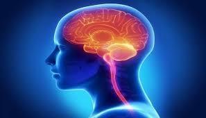 Efectos de la adrenalina y dopamina