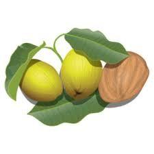Frutos del árbol de karité