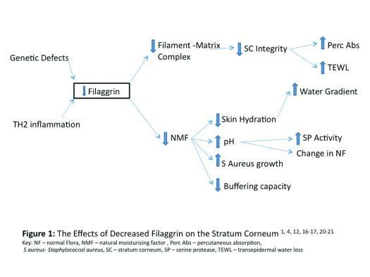 Efectos del déficit de filagrina en el startum corneum
