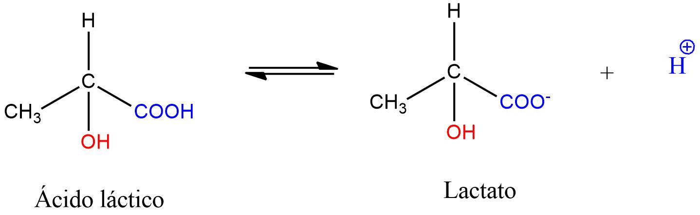 Disociación del ácido láctico en lactato