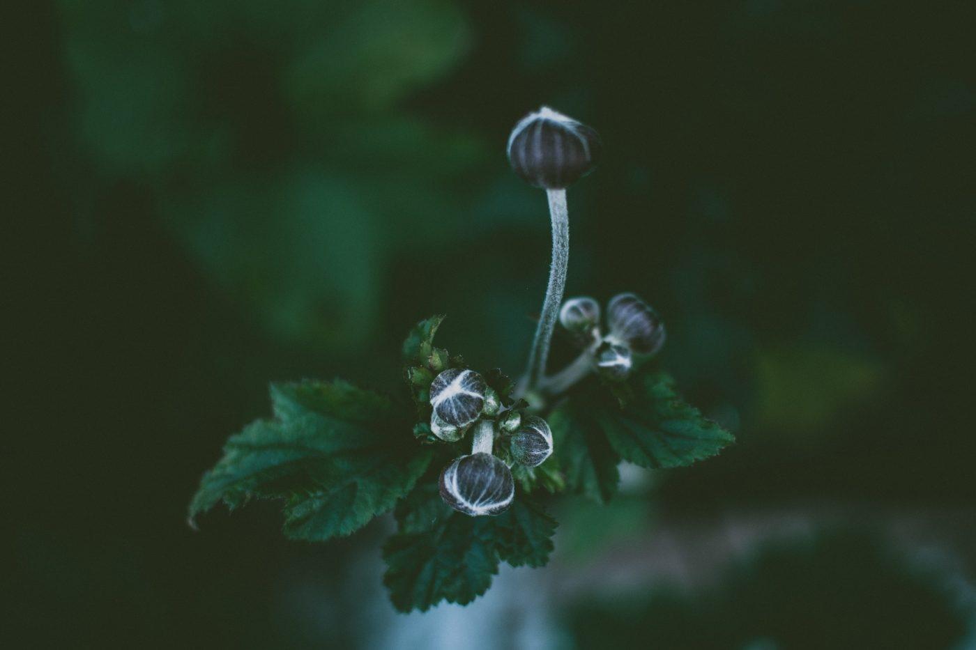 Brotes de una planta