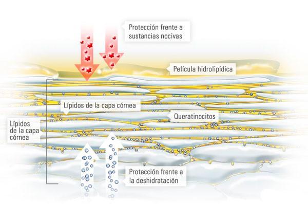 La piel como función barrera