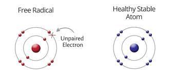 Los radicales libres contienen electrones desapareados que los desestabilizan