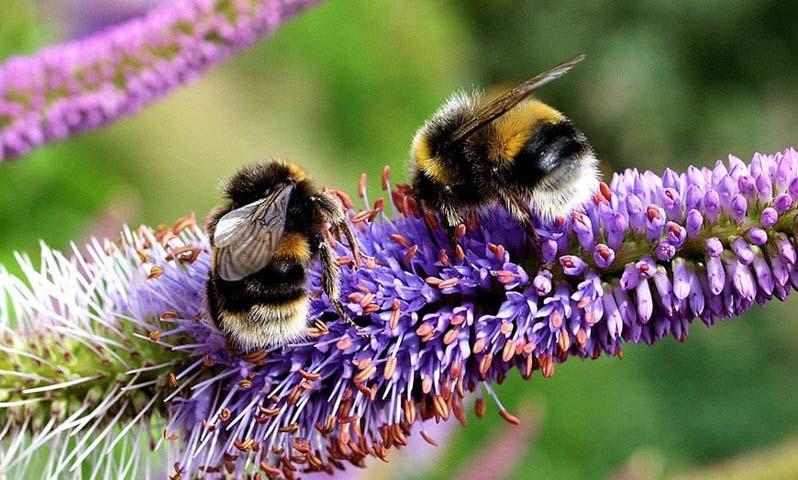 Abejas recolectando para crear miel, propóleo y jalea real