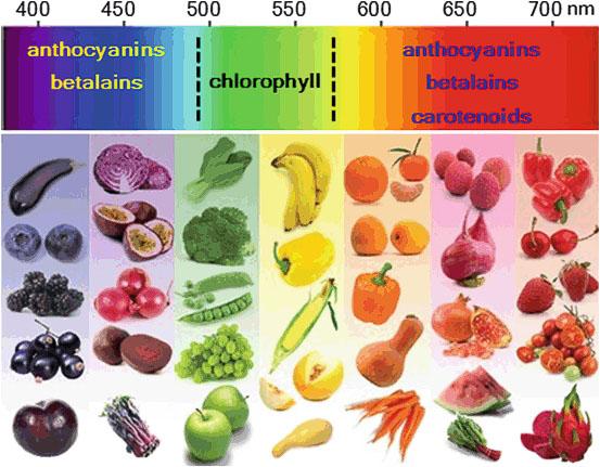 Comparación de betalaínas y antocianinas