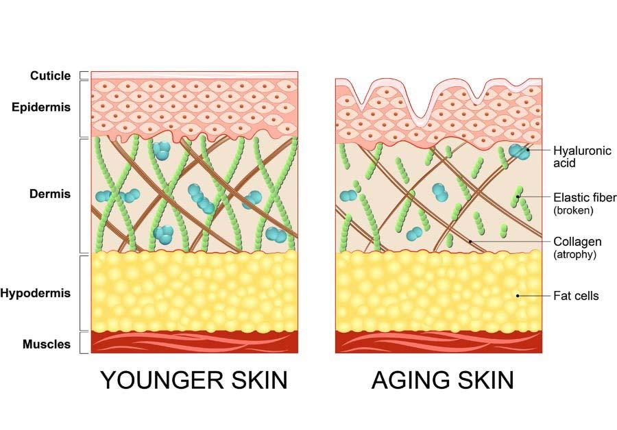 Diferencias entre piel joven y piel madura