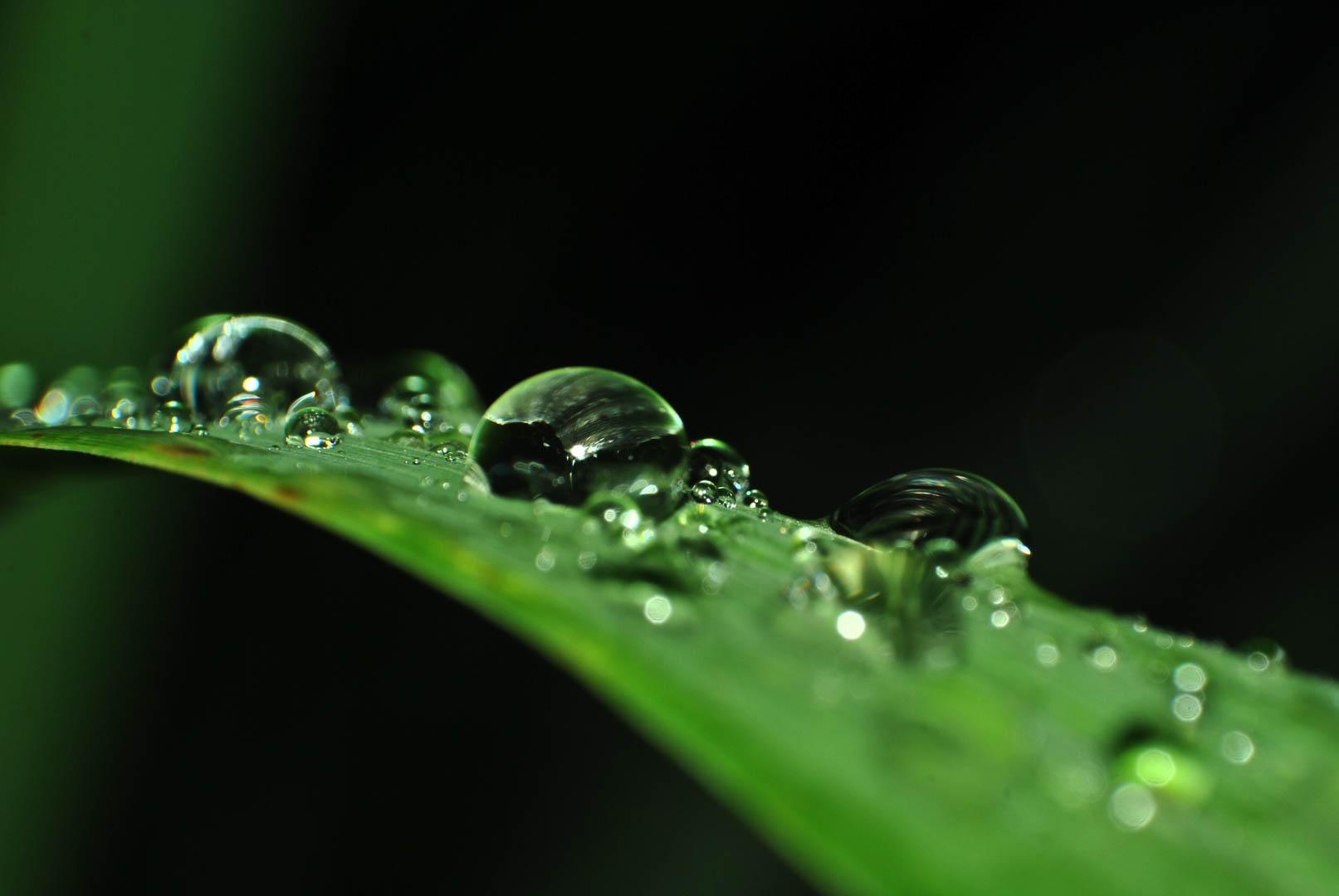 Agua sobre una planta