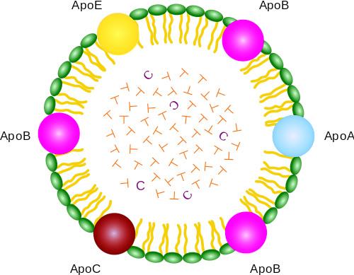Esquema de una lipoproteína