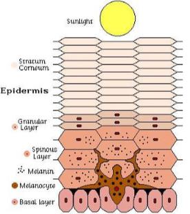 La pigmentación nos protege de los rayos solares