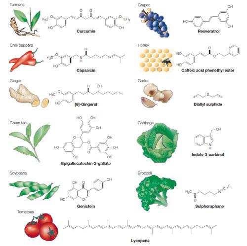 Moléculas habituales de nuestra vida