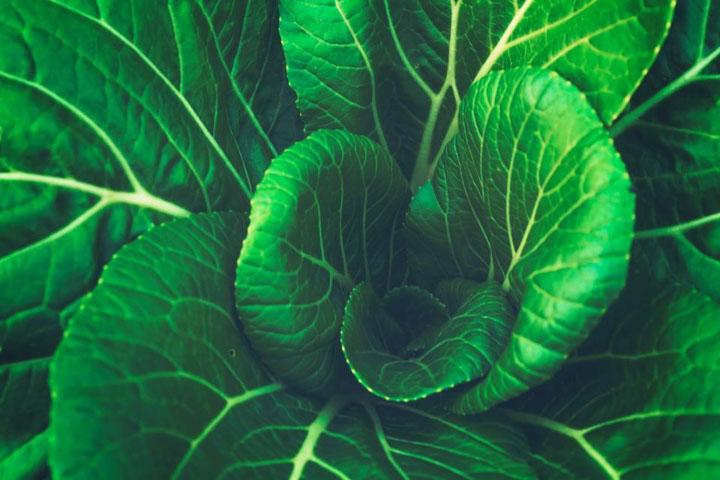 Uso ancestral de los componentes de las plantas
