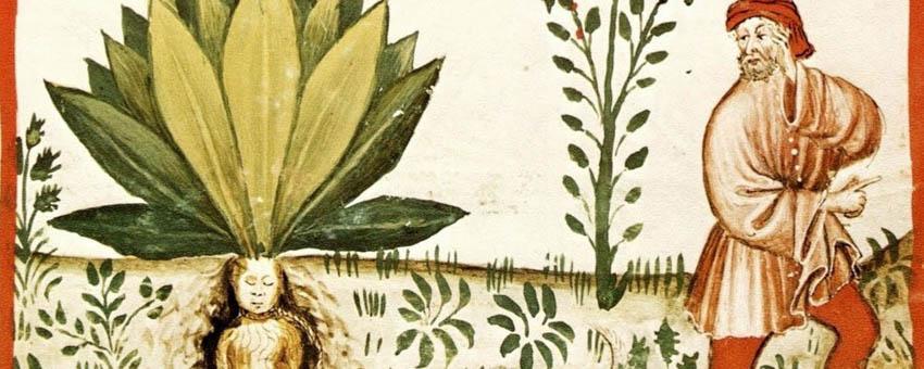 La splantas como fuente de medicina