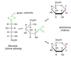 Ciclación de la glucosa en medio acuoso