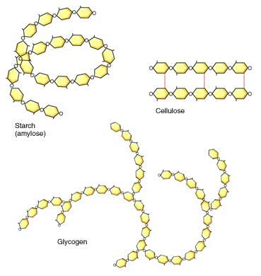 Estructura química de los hidratos de carbono almidón, glucógeno y celulosa