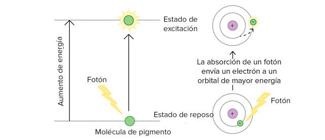 Excitación de electrones producida por luz ultravioleta