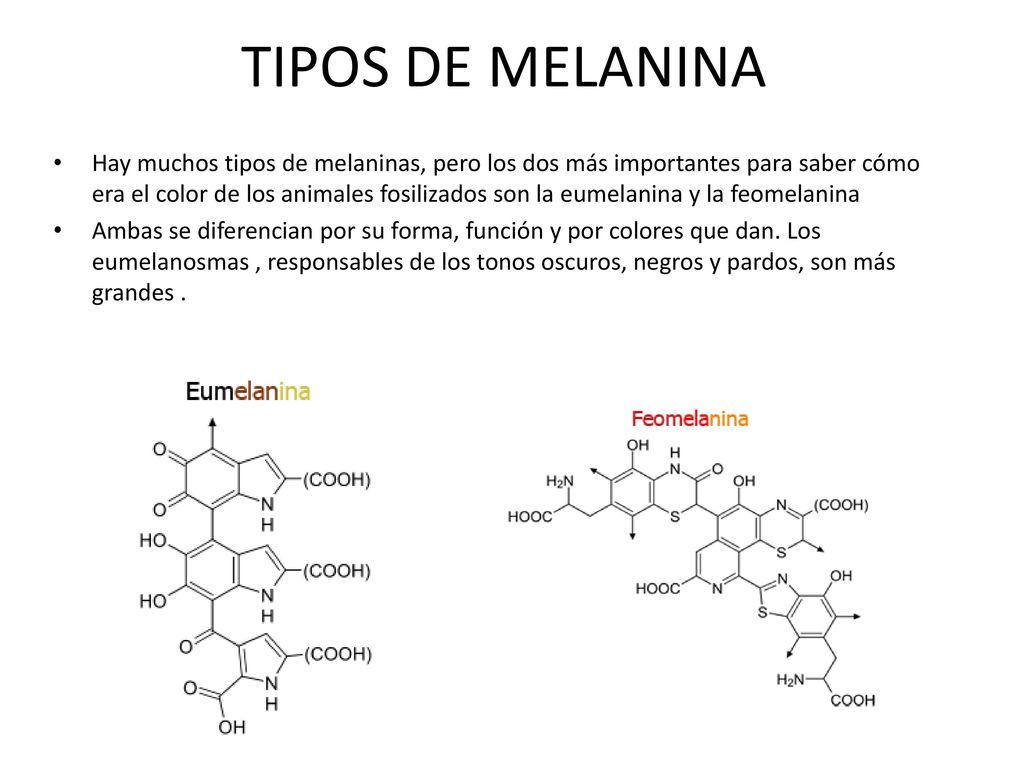 Eumelanina y feomelanina producidas por la radiación ultravioleta