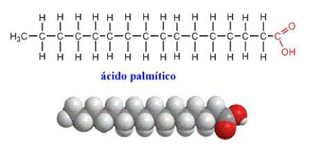 Estructura química del ácido palmítico