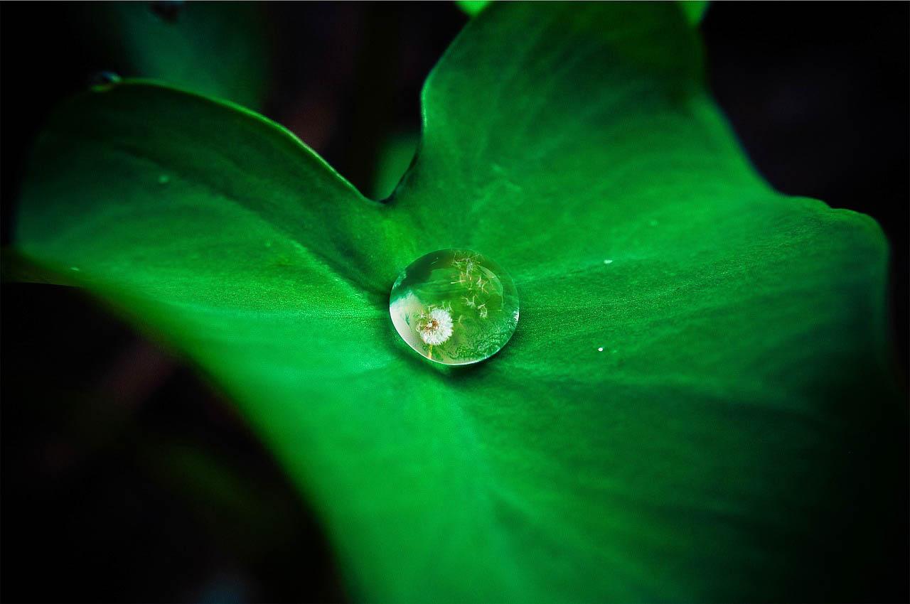 Autolimpieza de las hojas de loto
