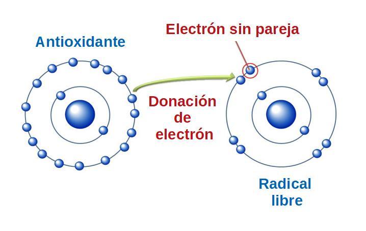 Donación de electrones de los antioxidantes