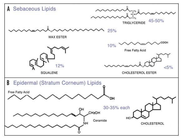 Composición de los diferentes tipos de lípidos de la piel