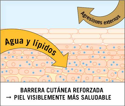 El manto ácido es muy importante para la barrera cutánea