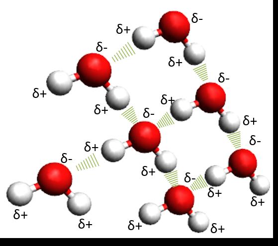 Puentes de hidrógeno entre las moléculas de agua