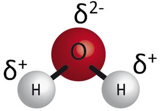 La polaridad de la molécula del agua
