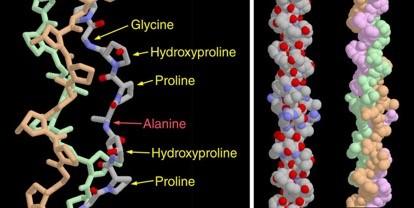 Estructura química del colágeno