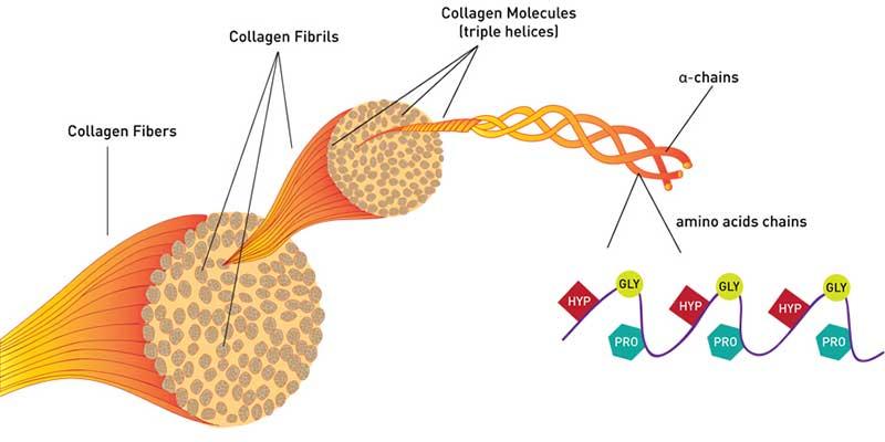 Estructura detallada del colágeno