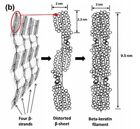 Estructura de la beta queratina