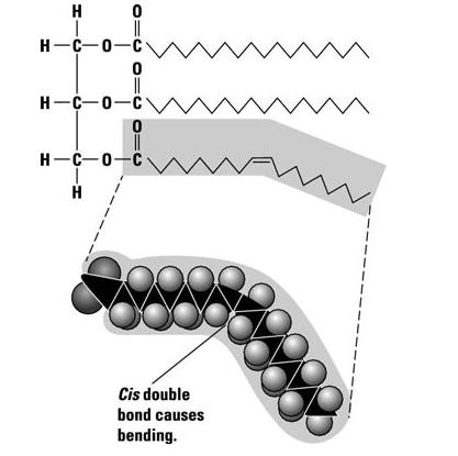 Triglicérido con un ácido graso insaturado