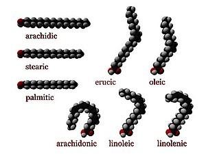 Estructura de algunos ácidos grasos