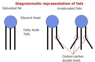 Representación esquemática de triglicéridos