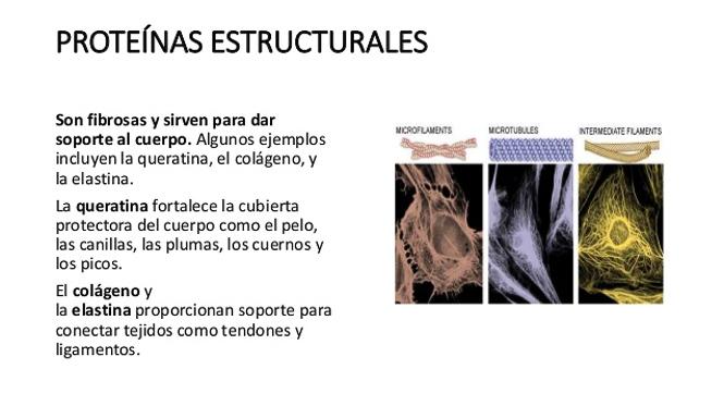 Proteínas estructurales de la piel