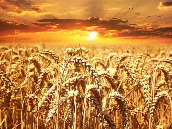 Fitoesteroles en los cereales