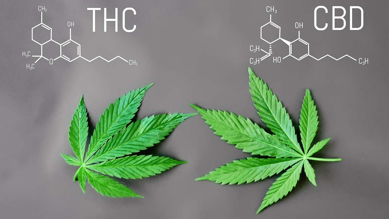 Estructura química del CBD y THC